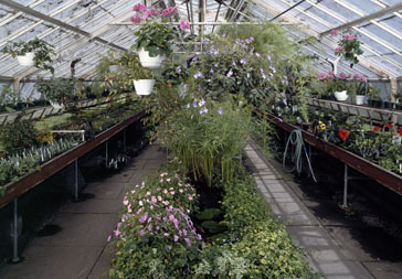 A Greenhouse For Cut Flowers