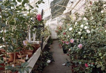 Lyman greenhouse interior.
